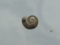 Snail, #A407 (Closeup)