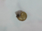Snail, #A417 (Closeup)