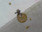 Snail, #A425 (Closeup)