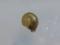 Snail, #6908 (Closeup)