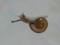 Snail, #7085 (Closeup)