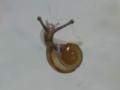 Snail, #7086 (Closeup)