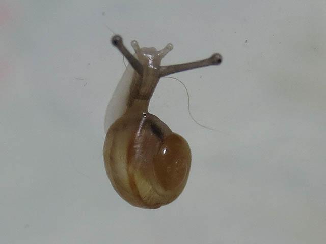 Snail, #7087 (Closeup)