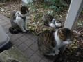 Mama-Imo, Koyuki & Hoshi, #7176