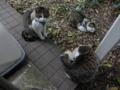 Mama-Imo, Koyuki & Hoshi, #7178