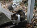 Mama-Imo & Hoshi, #7330