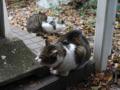 Mama-Imo & Hoshi, #7331