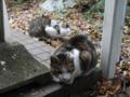 Mama-Imo & Hoshi, #7332