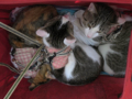 Umi, Hana & Koumi, #0602