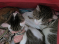 Umi, Hana & Koumi, #0605