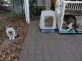 Mama-Imo & Hoshi, #7404