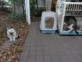 Mama-Imo & Hoshi, #7405