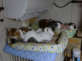 Beatrice, Elisabetta, Umi & Koumi, #7406