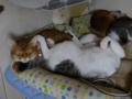 Beatrice, Elisabetta, Umi & Koumi, #7409