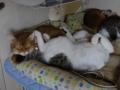 Beatrice, Elisabetta, Umi & Koumi, #7410