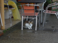 Cats of Houtong, #7666