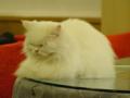 Cats of Xiao Mao Hua Yuan, #7796
