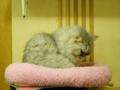 Cats of Xiao Mao Hua Yuan, #7807