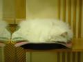 Cats of Xiao Mao Hua Yuan, #7843