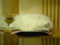 Cats of Xiao Mao Hua Yuan, #7844