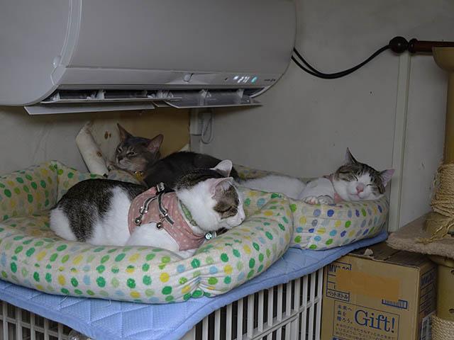 Margherita, Umi & Koumi, #8083
