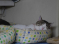 Margherita & Koumi, #8090