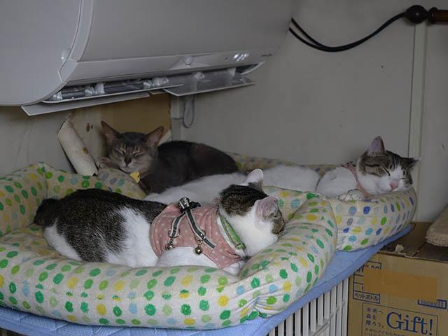 Margherita, Umi & Koumi, #8091