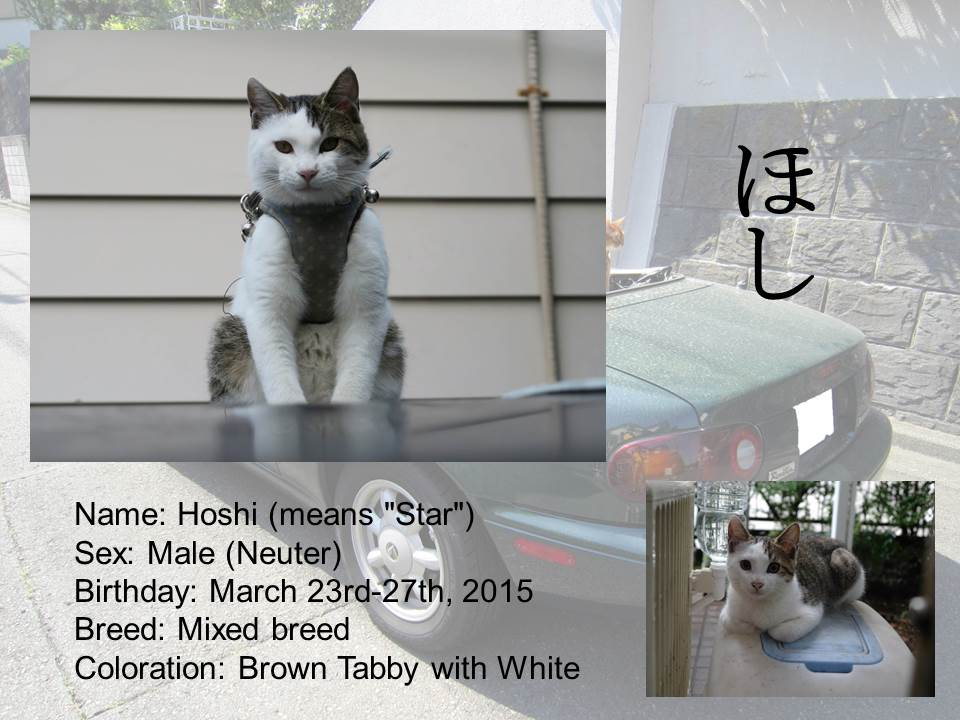 Introduction of Cats #13 - Hoshi (update)