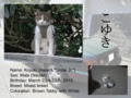 Introduction of Cats #12 - Koyuki (update)