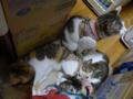 Valentina, Umi, Hana & Koumi, #8633