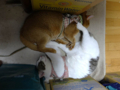 Elisabetta & Umi, #8988
