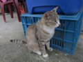 Cats of Houtong, #1143