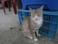 Cats of Houtong, #1144