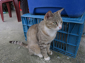 Cats of Houtong, #1145
