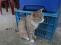 Cats of Houtong, #1146