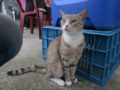 Cats of Houtong, #1147