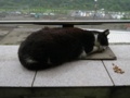 Cats of Houtong, #1155