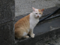 Cats of Houtong, #1158