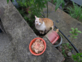Cats of Houtong, #1165