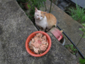 Cats of Houtong, #1166