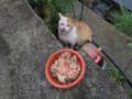 Cats of Houtong, #1167