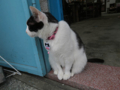 Cats of Houtong, #1175