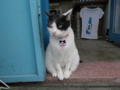 Cats of Houtong, #1176