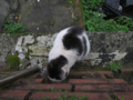 Cats of Houtong, #1179