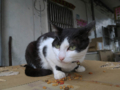 Cats of Houtong, #1190