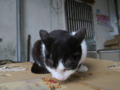 Cats of Houtong, #1191