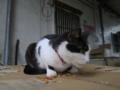 Cats of Houtong, #1192