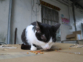 Cats of Houtong, #1193