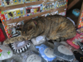 Cats of Houtong, #1239