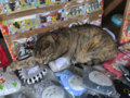Cats of Houtong, #1240